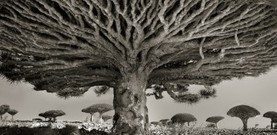 Voilà ce que l'on entend lorsque l'on place les anneaux de croissance d'un arbre sur un tourne-disque. | Aisthesis | Scoop.it
