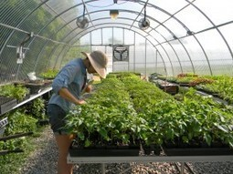 Jones Valley Urban Farm, Same Fresh Food With a New Direction | Vertical Farm - Food Factory | Scoop.it