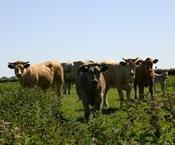 McDonald's to buy sustainable beef by 2016 | Sustain Our Earth | Scoop.it