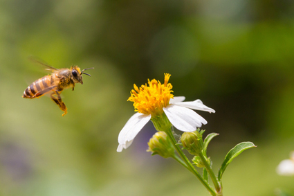 EPA Approves New Pesticide Highly Toxic to Bees   EcoWatch   Scoop.it