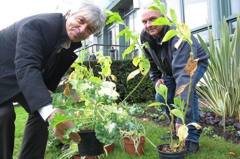 A Antony, ce sont les plantes qui mesurent la pollution de l'air | Marketing respectueux | Scoop.it