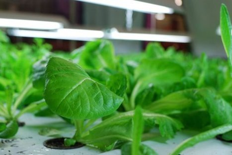 Vertical farm turns waste into food | Vertical Farm - Food Factory | Scoop.it