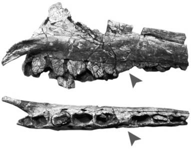 Des scientifiques ont découvert un dinosaure avec une maladie des ... - Quotidien du Peuple   Parondotie : l'actu   Scoop.it