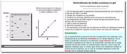 Electroforesis de ácidos nucleicos en gel | Biología. Biology. Education. TIC | Scoop.it
