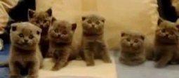 Man Talks To Deaf Cat In Sign Language - Love Meow   Les chats c'est pas que des connards   Scoop.it