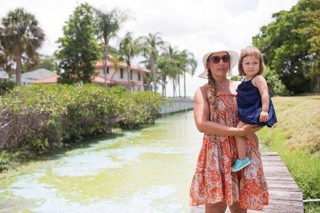 Reeking, Oozing Algae Closes South Florida Beaches - NYTimes.com | GMOs & FOOD, WATER & SOIL MATTERS | Scoop.it