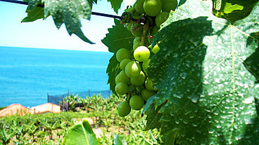 Wine in Sussex, olives in Devon, oranges in Hampshire? How Britain might resemble Madeira by 2060 | Todays News, Tomorrows History | Scoop.it