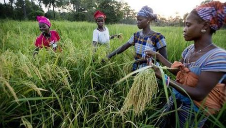 Agriculture vital to tackling effects of climate change | CGIAR Climate in the News | Scoop.it