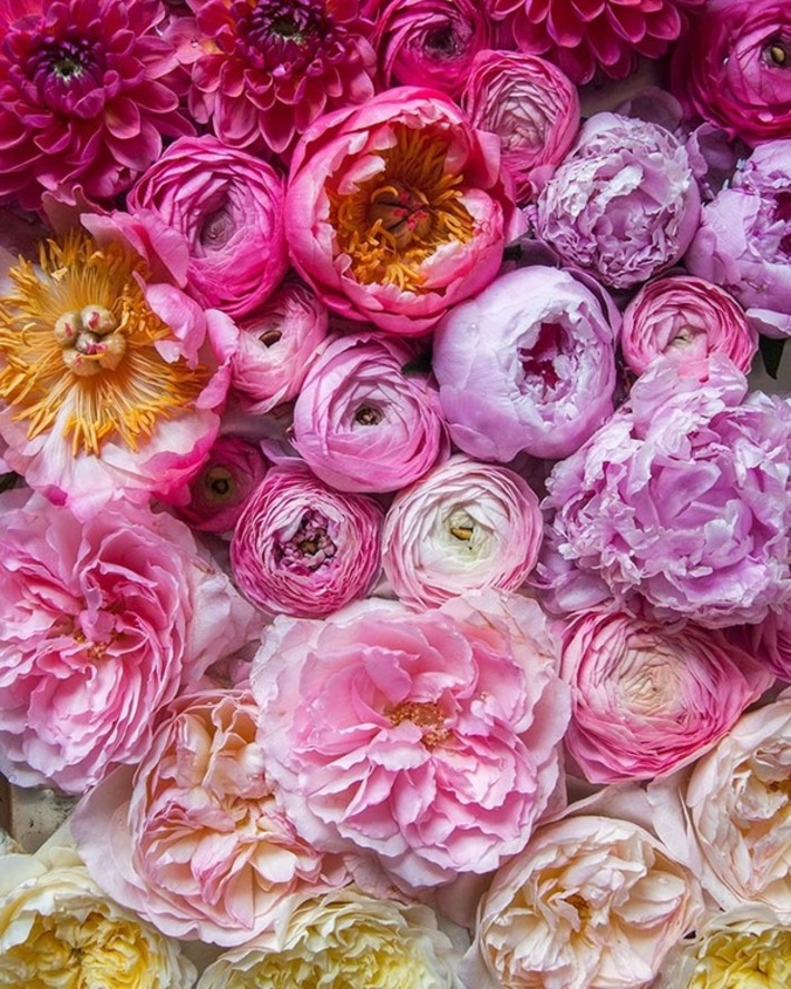An app for IDing flowers | Garden apps for mobile devices | Scoop.it