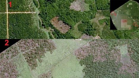 Lutte contre la déforestation : l'industrie alimentaire recourt au satellite | PRODUITS AGRICOLES ET MARCHES - AGRICULTURAL PRODUCTS AND MARKETS | Scoop.it