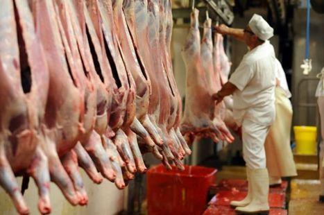 Abattoirs: des «dysfonctionnements majeurs» constatés à Autun | La Gazette des abattoirs | Scoop.it