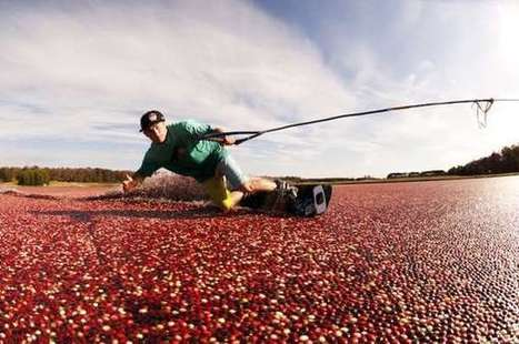 Cranberry-Covered Extreme Sports - The Red Bull ... - Trend Hunter | extreme sport trends community | Scoop.it