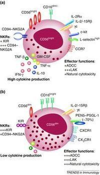 Latest updates in my Pinterest Board for NK cells and their Receptors | Immunology for University Students | Scoop.it