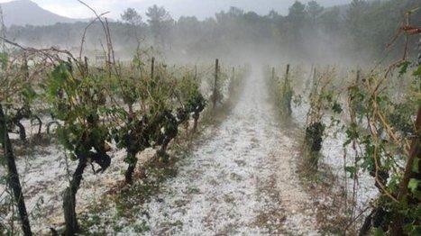 Orage de grêle dans la région de Montpellier : La production viticole du Pic Saint Loup ravagée - France 3 Languedoc-Roussillon | Verres de Contact | Scoop.it