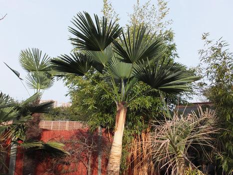 Alternative Eden Exotic Garden: The Full Brazilian | ExoticGardening | Scoop.it