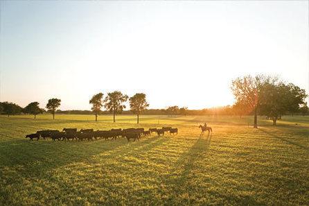 44 Steaks | Know Your Rancher | 44 Steaks | steak grade | Scoop.it