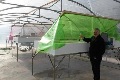 Des serres de micro-algues inaugurées à Nice! | Valorisation des algues | Scoop.it