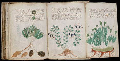 File:Voynich Manuscript (170).jpg - Wikipedia, the free encyclopedia | Merveilles - Marvels | Scoop.it
