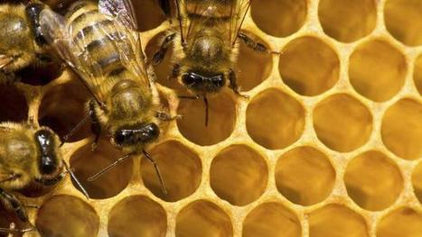 Bees do it, so why can't bee keepers and colleagues?   Everyday Leadership   Scoop.it