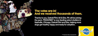 Bunny's Blog: Detroit/Flint, Mich. and Erie, Pa. join Pedigree Feeding Project | Pet News | Scoop.it