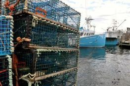NS: Colwell announces work on commercial fisheries strategy moving forward - Daily Business Buzz - Nova Scotia | Nova Scotia Fishing | Scoop.it