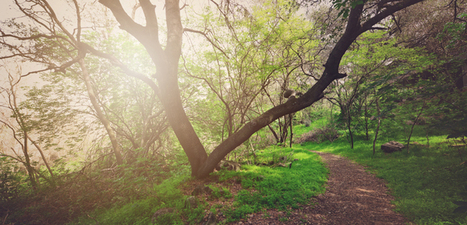 How Nature Boosts Kindness, Happiness, and Creativity - Mindful | Living Mindfulness & Compassion | Scoop.it