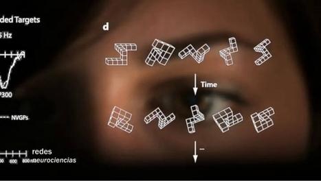 Los efectos  de los videojuegos en el cerebro según la neurobióloga Daphne Bavelier | I didn't know it was impossible.. and I did it :-) - No sabia que era imposible.. y lo hice :-) | Scoop.it