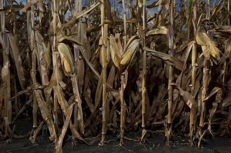 EPA proposes smaller requirements for biofuel use | Sustainability Science | Scoop.it