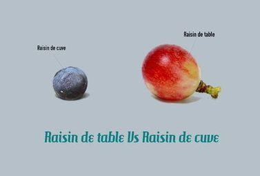 Peut-on faire du vin avec du raisin de table ? - Magazine du vin - Mon Vigneron | Actualités du Vin | Scoop.it