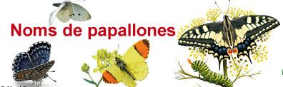 (CA) (ES) (FR) (EN) (LA) - Noms de papallones | TERMCAT | Glossarissimo! | Scoop.it