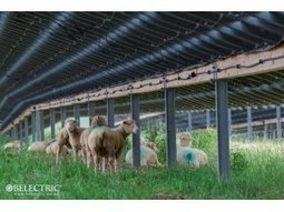 Sheeps and PV modules cohabit in UK's largest solar farm | CSP - Concentrated Solar Power | Scoop.it