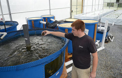 WeFeedUs uses innovative techniques to grow year-round   Aquaponics World View   Scoop.it
