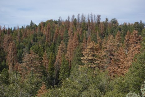 Scientists say climate change could cause a 'massive' tree die-off in the U.S. Southwest   CALS in the News   Scoop.it
