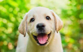 DOG TRAINING BY PROFFESSIONAL DOG TRAINER:- WESLEY LAIRD: A Trained Dog Is A Happy Dog | Dog  Training Melbourne | Scoop.it