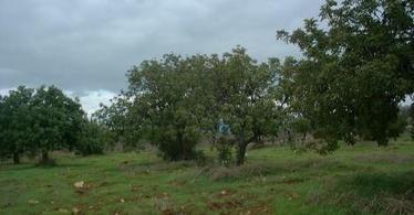 'Don't cut trees' plea - InCyprus (blog) | Cyprus Green | Scoop.it