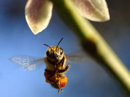Bees using scavenged plastic to build hives   Synergetic Management: Business Innovation & Improvement   Scoop.it