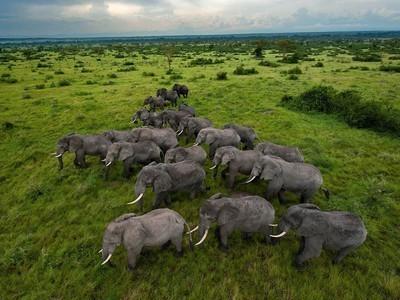 Africa's Massive Elephant Slaughter Increasingly Militarized, Mafia-ized | Life on Earth | Scoop.it