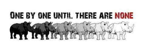 Image: One by One, Until All Rhino are Gone! | What's Happening to Africa's Rhino? | Scoop.it