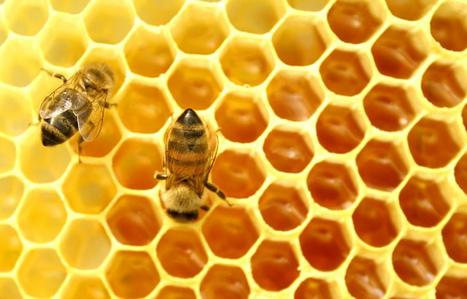 Las abejas están muriendo, ¿cuánto nos queda a los humanos? | Noticias de ecologia y medio ambiente | ECOSALUD | Scoop.it