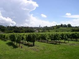 ViticultureRésultats des essais en viticulture biologique 2012 en ... - Le Paysan Tarnais | Christophe Durand Conseils | Scoop.it