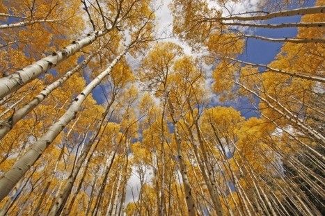 Trees Are Dying From 'No Obvious Cause' In Rocky Mountains, Report Says | Sustain Our Earth | Scoop.it