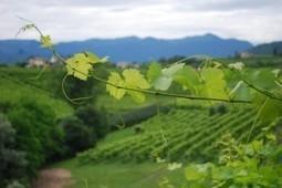 A Veneto Journey Farm to Table in One | David M Frey | Venezia e traslochi | Scoop.it