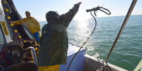 Bruxelles s'alarme de la surpêche en Méditerranée - le Monde | Actualités écologie | Scoop.it