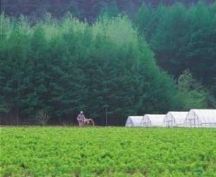 L'exposition aux pesticides augmente le risque cardiovasculaire | Toxique, soyons vigilant ! | Scoop.it