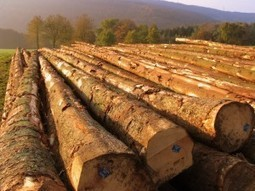 Why Kamps' Lumber Recycling Project Makes a Crucial Difference in Service - Kamps Pallets | Manufacturing | Scoop.it