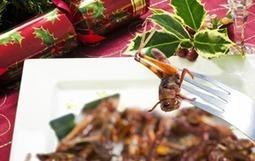 Comer insectos - Secuencia didáctica | Bichos en Clase | Scoop.it