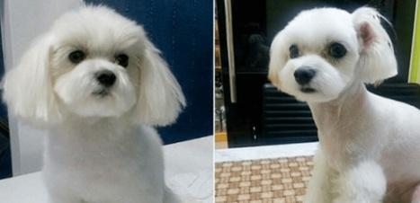 Insolite : Les chiens ont recours à la chirurgie esthétique ! | chirurgie silhouette en Tunisie | Scoop.it