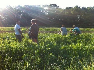 A Crowdfunded Farm Brings Traditional Mexican Flavors to New York - Lifestyle - GOOD | School Kitchen Gardens | Scoop.it