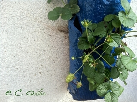 Beneficios de las fresas para nuestra salud | Ecocosas | fashion | Scoop.it