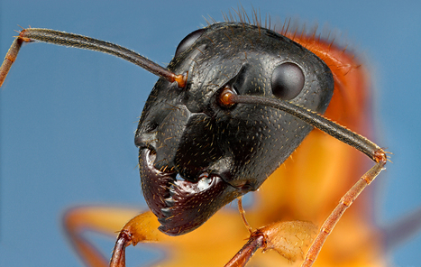 Bug-Inspired Robots Designed to Do Our Dirty Work | Biomimicry | Scoop.it